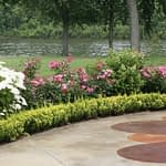 Sunjoy Gold Pillar barberry planted as an edging for a landscape bed alongside a patio.
