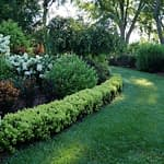 A garden in summer with a low edging of Sunjoy Mini Saffron barberry.